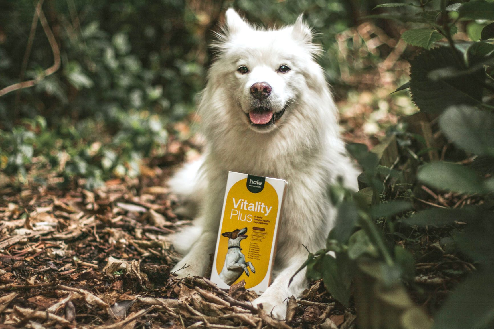 Cannabis Pet Business Launches First Natural Supplements