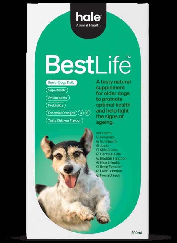 Best Life Senior Dogs